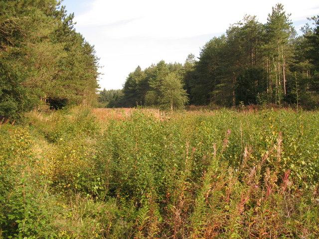 Harlech Forestry