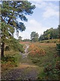 SU2609 : Track on Acres Down by Peter Facey