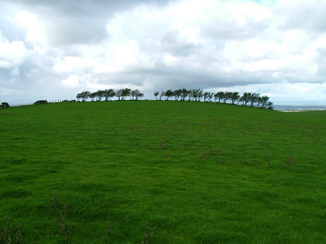 Line of trees on Caermote Hill