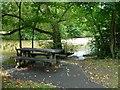 SO1091 : Shady picnic table by Penny Mayes
