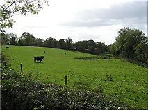 C2400 : Milltown Townland by Kenneth  Allen