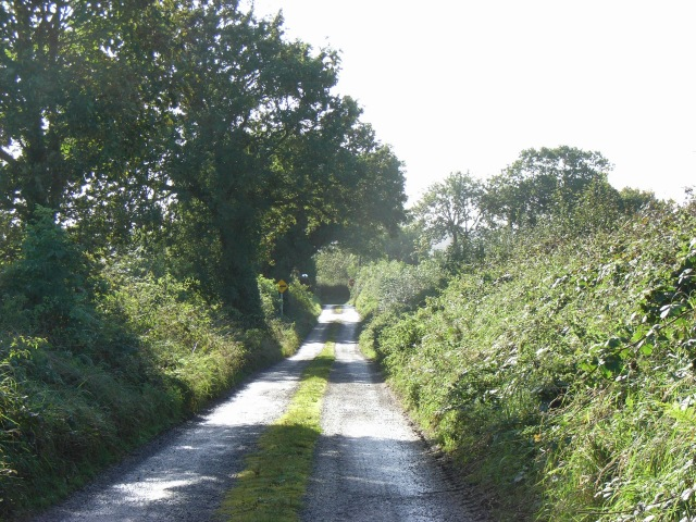 Leafy lane off the N51 between Navan & Slane at Dunmoe