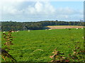 SX1361 : View to Roughparks Plantation by Jonathan Billinger